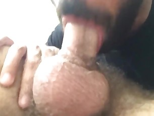 amateur,blow,job,otter,bear